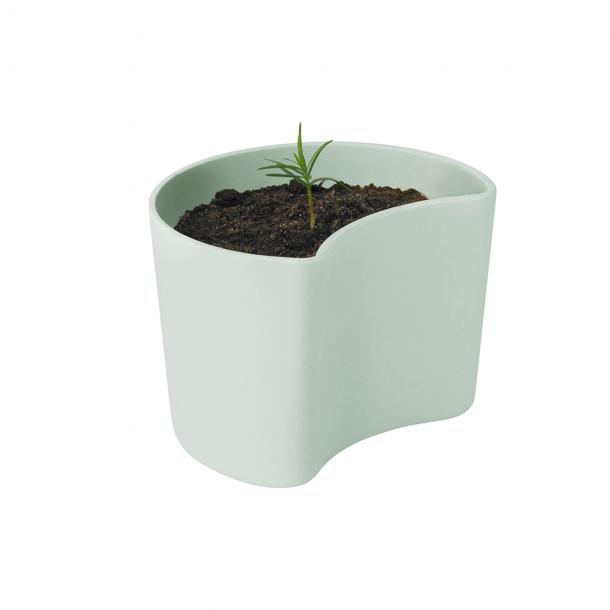 RIG-TIG Your Tree Plantepotte Med Frø Grøn